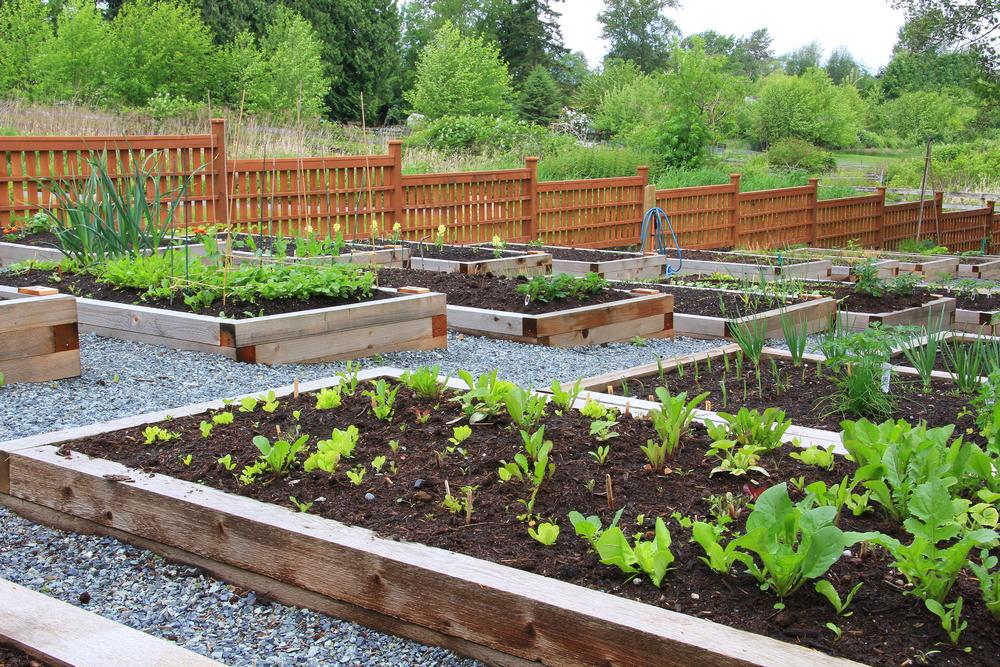 garden equipment rental